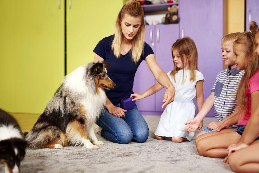 Cours d'éducation canine privé