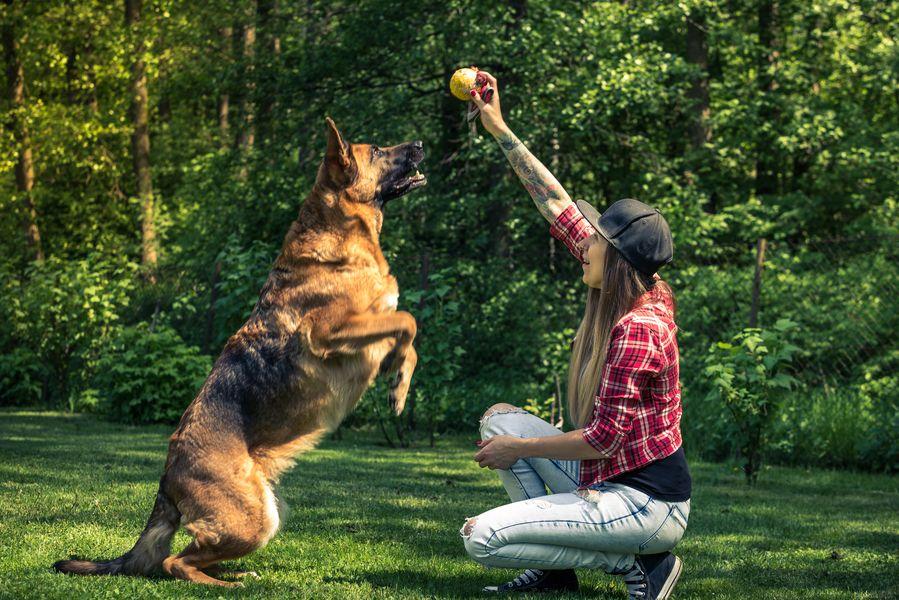 récompenser pour éduquer son chien
