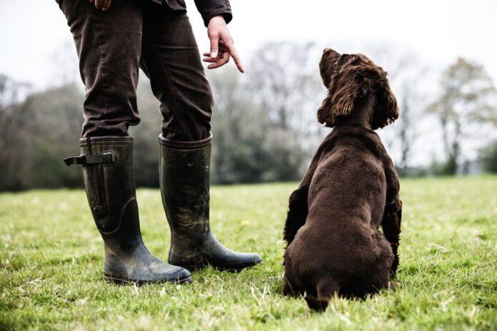 Trouver un éducateur canin à Bordeaux