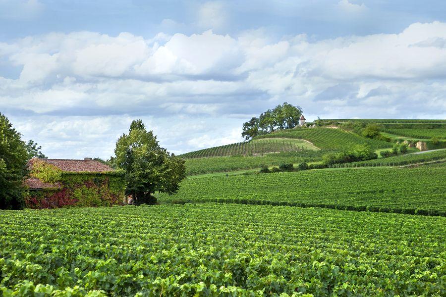Le vignoble de Saint Emilion